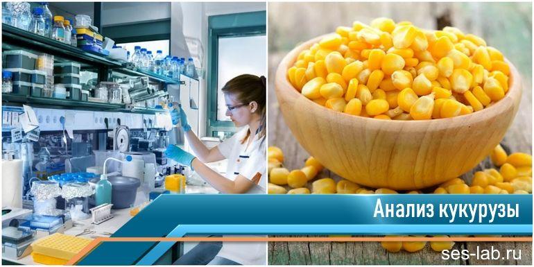 экспертиза кукурузы