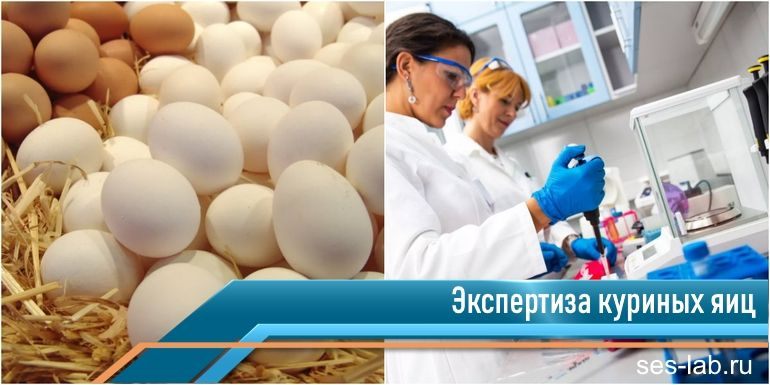 проверка куриных яиц