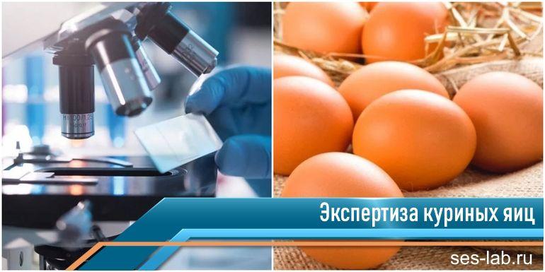 экспертиза куриных яиц