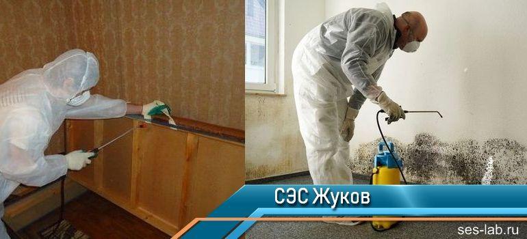 Санитарно-эпидемиологическая служба Жуков