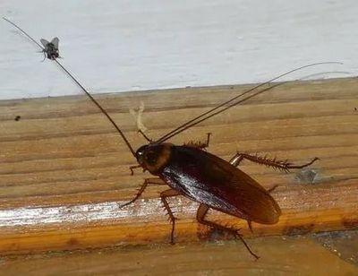 дезинсекция от тараканов Одинцово