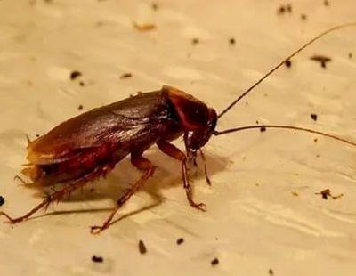 уничтожение тараканов Одинцово